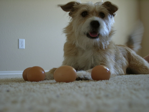Abe and the eggs