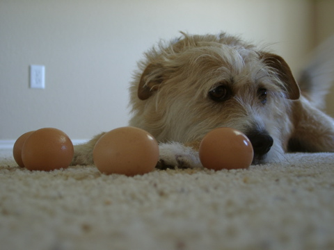 Abe and the eggs - part II